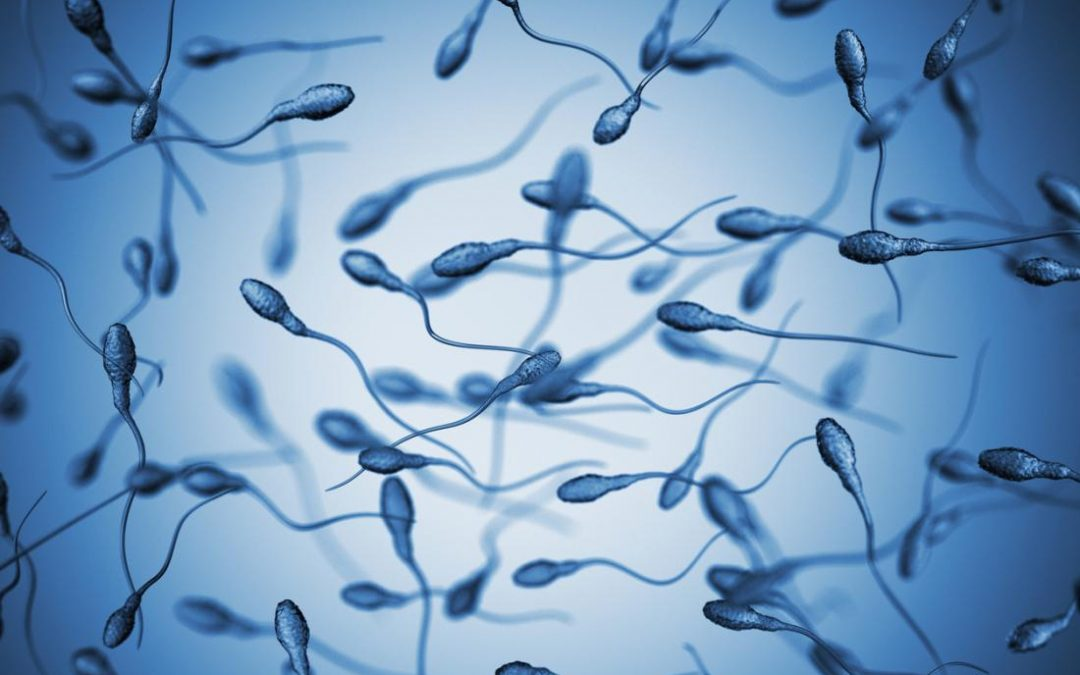 What sex are sperm?